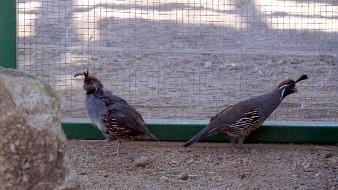 Centro Ecológico de Sonora reporta robo de aves exóticas
