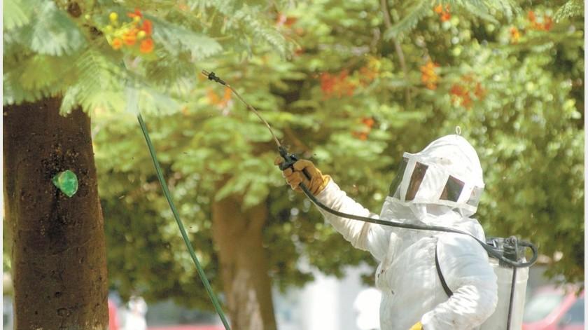 Los bomberos acuden a retirar los enjambres si hay peligro inminente, de lo contrario se busca apoyo de apicultores.(Julián Ortega)