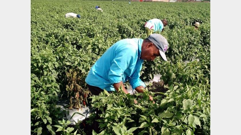 California otorga apoyo a inmigrantes indocumentados ante Covid-19; primer fondo de este tipo en EU(Archivo GH)