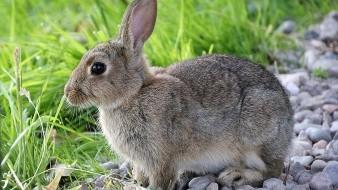 El virus mortal aparentemente saltó de conejos domésticos a salvajes y está amenazando la vida y el hábitat de millones de criaturas.