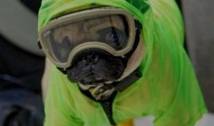 Es un cachorro de la raza pug que ha sido fundamental en la terapia sicológica que requieren médicos y enfermeras del Centro Médico Nacional