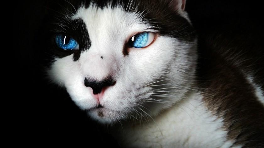 Los gatos sobreviven más a una mordedura de serpiente venenosa que los perros(Pixabay)