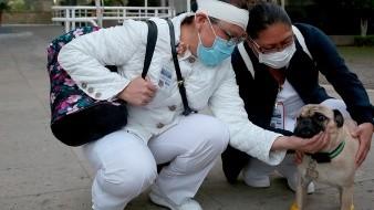 Un perro ayuda a aliviar el estr�s en personal de salud de hospital mexicano