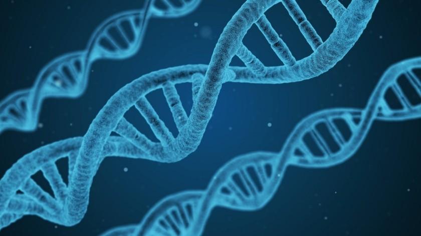 David Enard, profesor asociado de la Universidad de Arizona, busca en el ADN procesos de adaptación que se desencadenaron por epidemias ocurridas en el pasado.(Pixabay)
