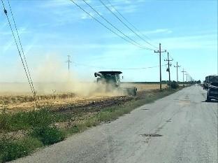Batallan productores con comercialización de trigo panificable