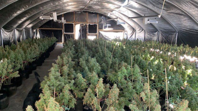 El cultivo ilegal de mariguana estaba cerca del Colegio Palo Verde en Blythe, California.(Especial)