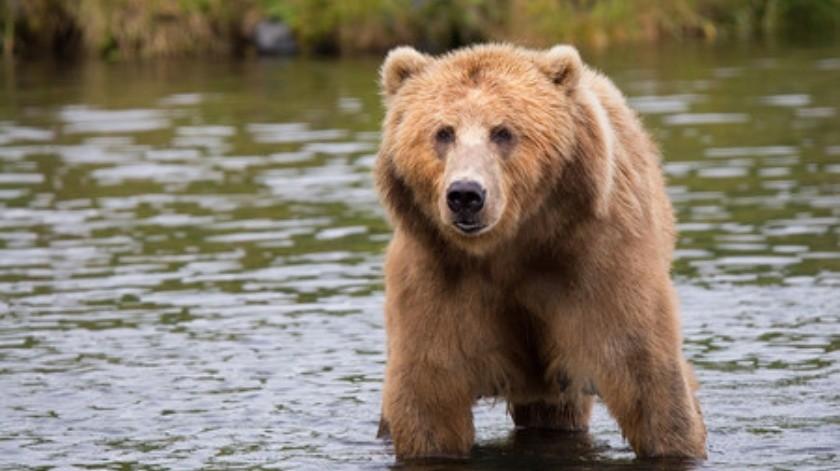 Ebrio ingresa al recinto de un oso(Tomado de la red)