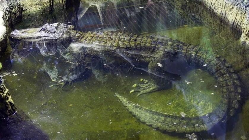 El reptil, de nombre Saturn, tenía unos 84 años de edad al fallecer el viernes, informó el zoológico.(AP)
