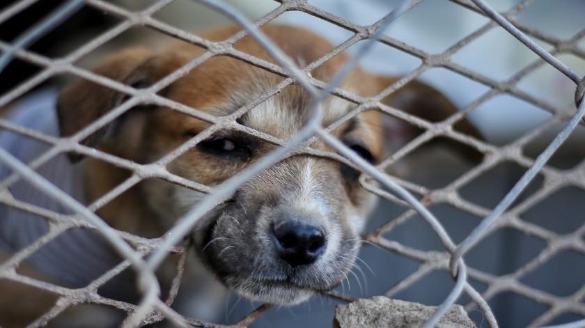 Disminuyen llamadas al Centro de Control Animal durante contingencia