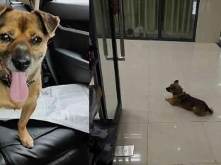 Perro esperó tres meses a su amo, quien murió de covid-19
