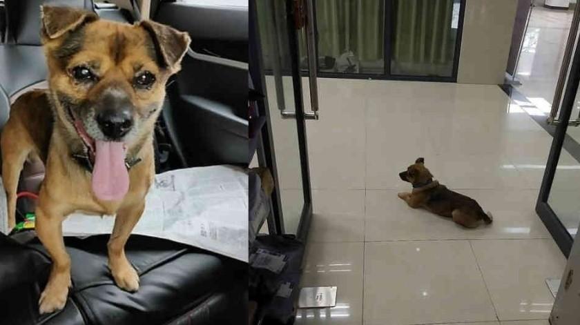 Perro esperó tres meses a su amo, quien murió de covid-19(Tomada de la red)