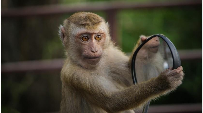 VIDEO: Monos roban muestras de Covid-19 en India(Pixabay)