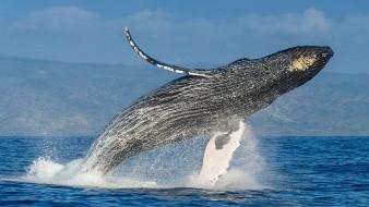 Debido a la pandemia no se realizará avistamiento de ballenas