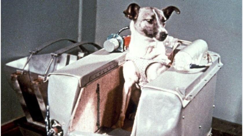 Vuelos espaciales: Laika la verdadera historia de su breve y trágica carrera espacial