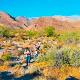 Salvan a migrantes en Tecate