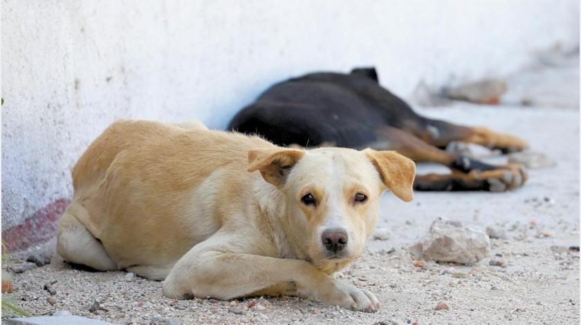 El encargado de Rescate Animal ha visto un incremento en los casos de maltrato de perros y gatos.Anahí Velásquez(Especial)