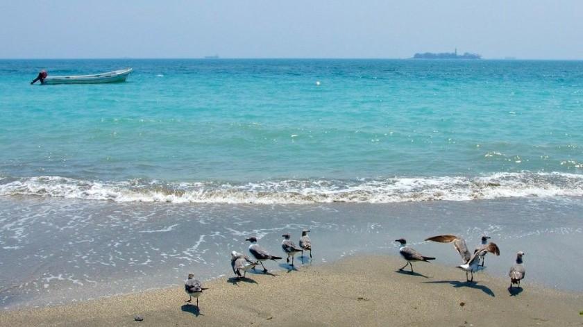 Por falta de turistas, playas de Veracruz se pintan de turquesa