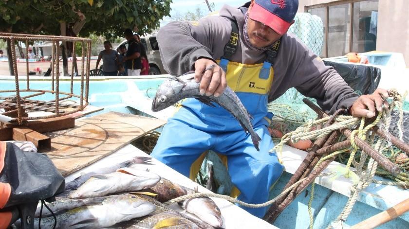 Gobierno de AMLO elimina apoyo energético a 300 mil pescadores, denuncian industriales(GH)