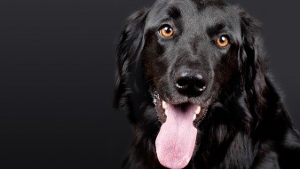 ¿Tu perro te rescataría en caso de una emergencia? los científicos tratan de averiguar