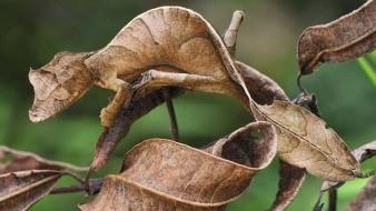 Asombroso el camuflaje de un camaleón