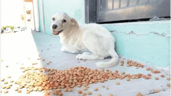 Pata de Perro invita a donar alimento pues perritos se comen entre sí
