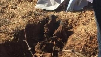 Localizan restos óseos humanos y un cuerpo en diferentes puntos de Nogales