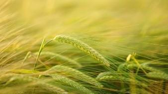 México advierte buen ciclo en agricultura de temporal en Primavera-Verano