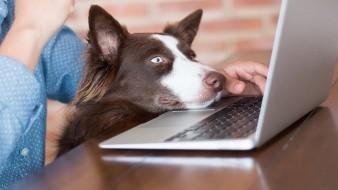 El Día de llevar a tu perro al trabajo se conmemora este 26 de junio.