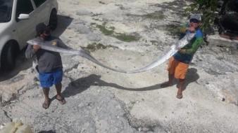 Sismo en México: A días de aparecer el pez remo en Cozumel, ocurre fuerte temblor en México