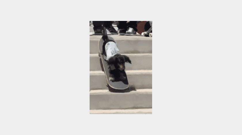 Video de perrito skater, se hace famoso en redes sociales(Tomada de la red)