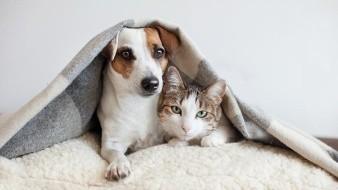 Las siete preguntas más comunes que se hacen los dueños de mascotas