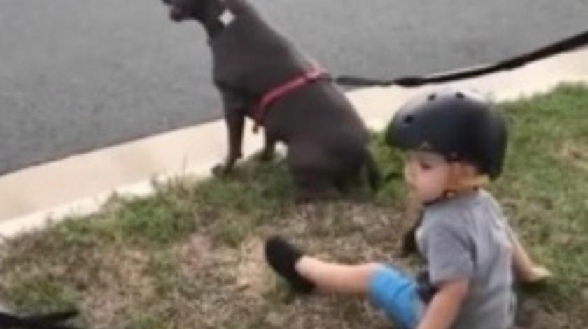 Niño se sienta cuando se lo ordenan a sus perros(Tomada de la red)