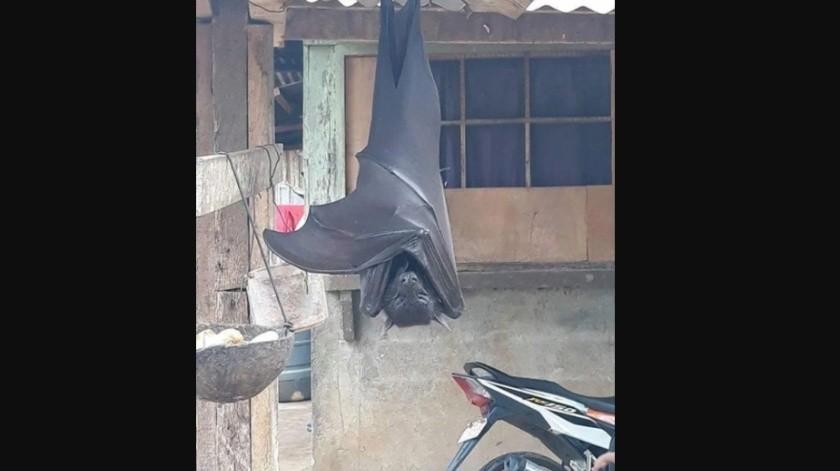 El murciélago de tamaño humano que vive en Filipinas