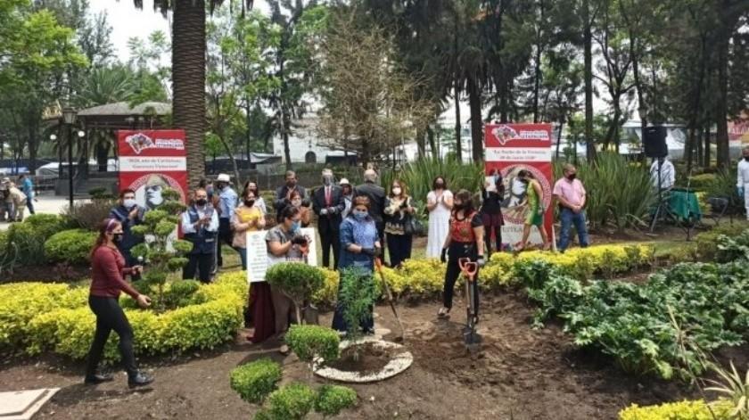 """Plantan árbol para conmemorar los 500 años de la """"Noche Victoriosa"""""""