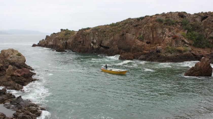 Alienta Gobierno de BC la pesca sustentable del erizo(Cortesía)