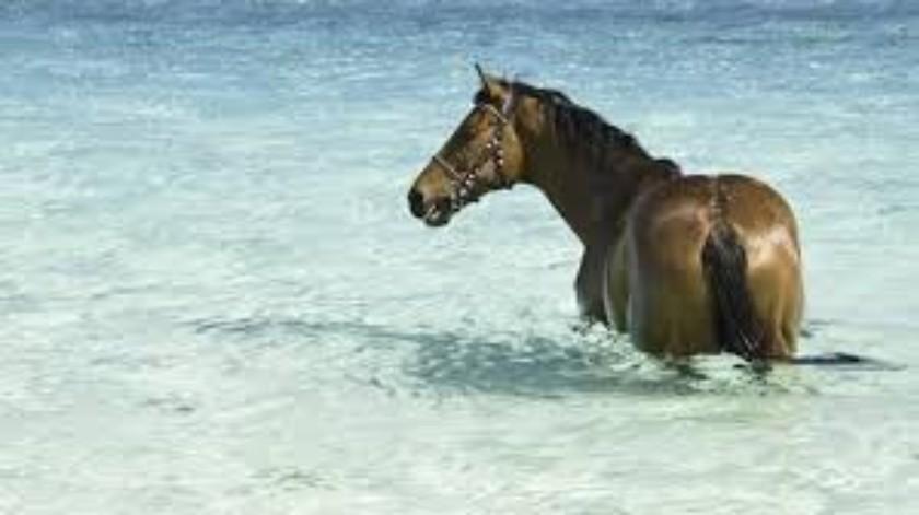 Aparece caballo nadando en una playa(Tomado de la red)