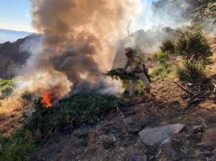 Localizan y destruyen plantío de mariguana en Valle Trinidad