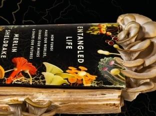 Biólogo cultiva setas en su libro sobre hongos