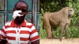 Sufre tremenda caída al huir de un babuino salvaje