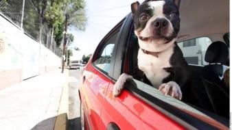 Los riesgos que corre tu perro al dejarlo dentro del auto