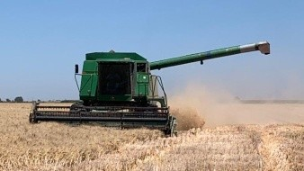 México: Campesinos e industriales luchan por el control de las semillas