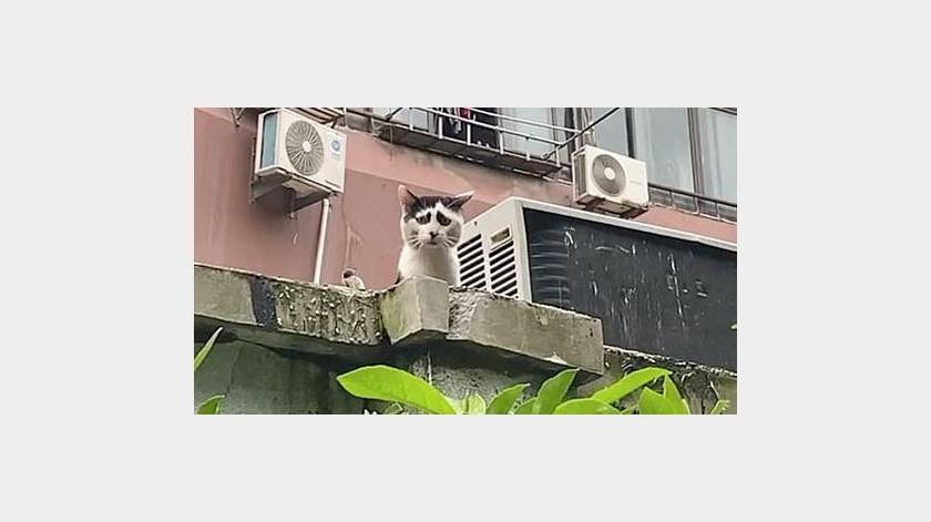 Gato  enternece redes sociales, por su aspecto triste(Tomada de la red)