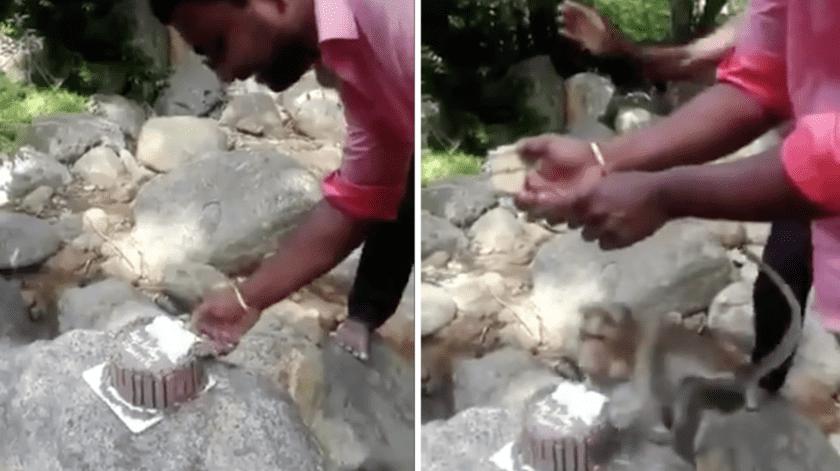 Mono roba un pastel en pleno aniversario de boda