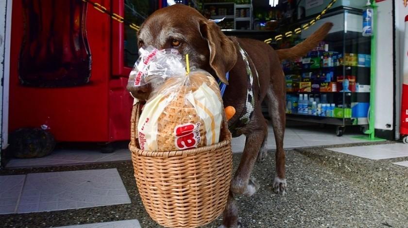 Perro trabajador  entrega despensas a domicilio(Tomada de la red)