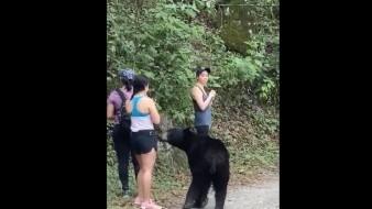 VIDEO: Sorprende oso a grupo de excursionistas en Parque Ecológico Chipinque