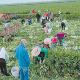 Productores del Sur salen bien libradospese a la pandemia