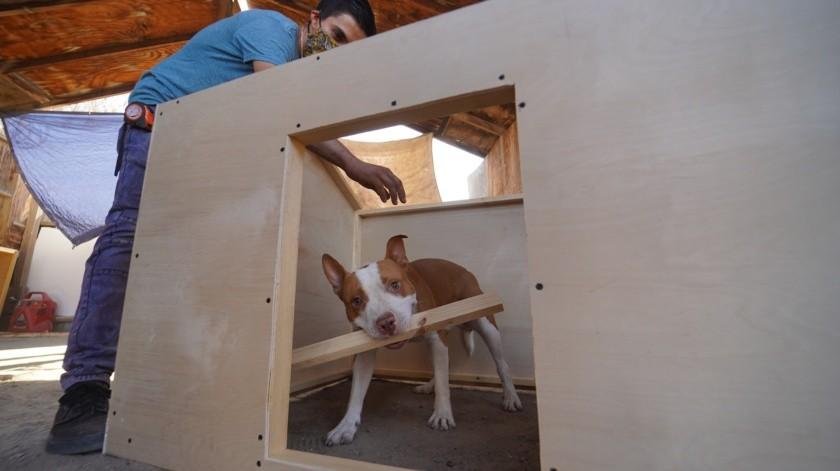 Construye casas de perro refrigeradas(VICTOR MEDINA)