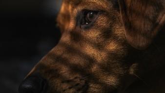 Cuando Buddy, que nunca había estado enfermo, desarrolló una mucosidad espesa en la nariz y comenzó a respirar con dificultad en abril, nadie excepto Robert Mahoney creía que el perro podría tener COVID-19.