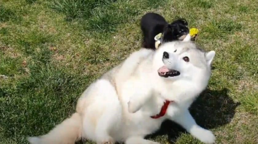 VIDEO: Hombre hace que su perro baje de peso usando flores