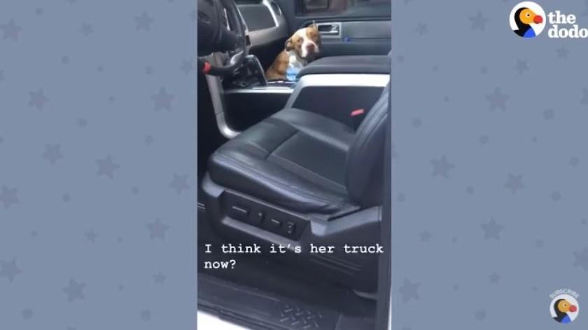 Un perro decidió subirse a un carro atemorizado